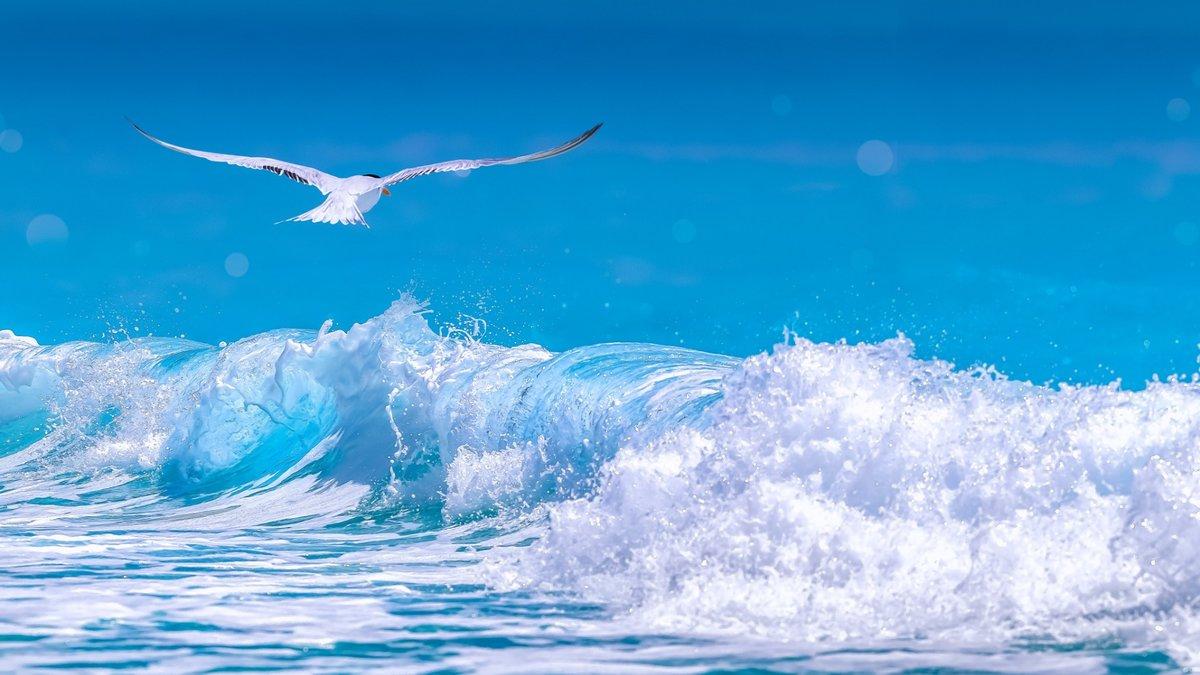 Открытки с морем чайки, днем рождения