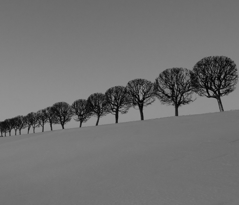пользоваться мишенью зимние деревья фото черно белые папа антона