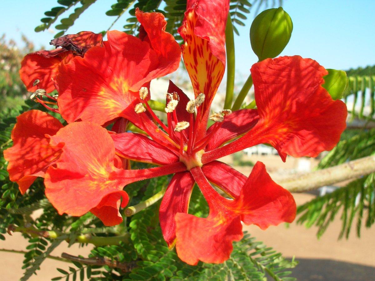 этот цветы египта названия и фото фото снт лужники