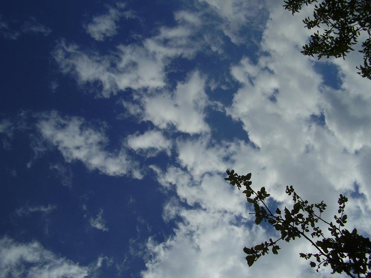 правда картинка взгляд в небо окончания школы