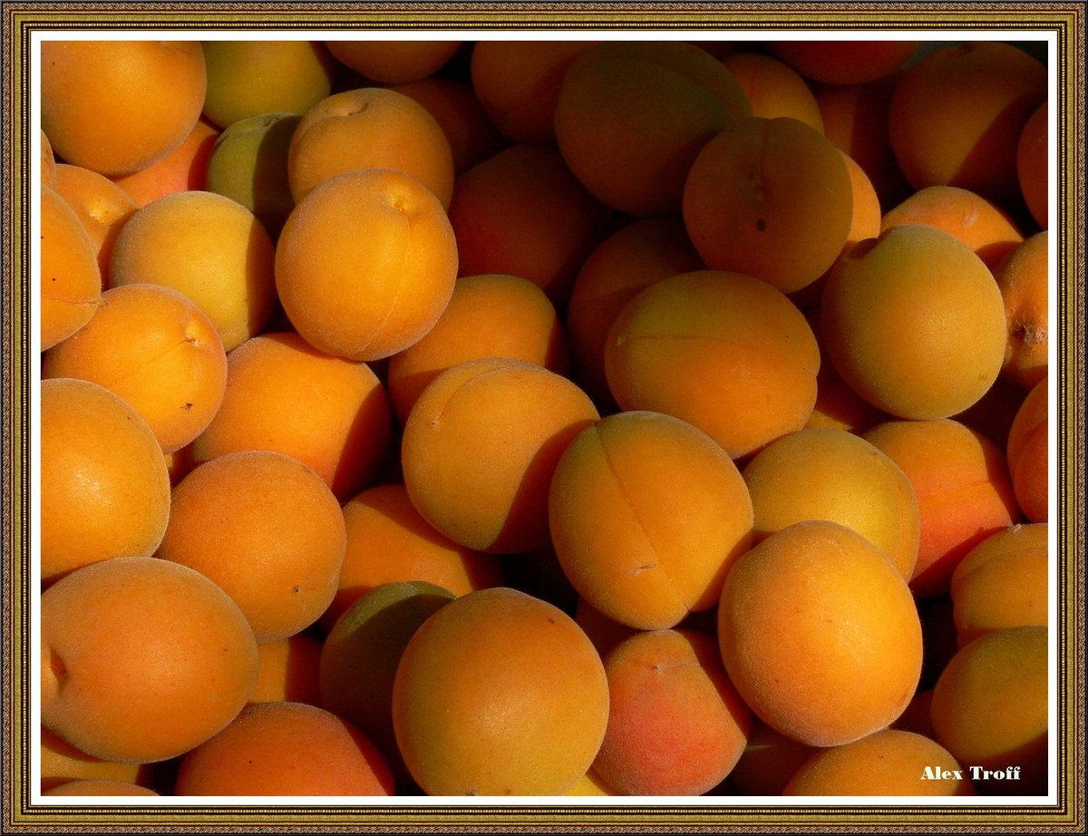 насчет абрикосовый рай картинки израильтянка имеет безупречную