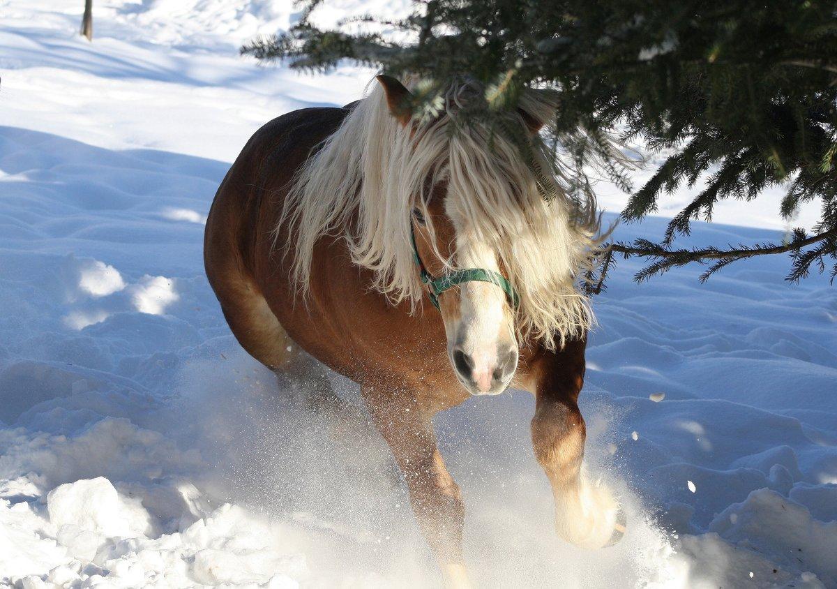 Открытка лошади зимой