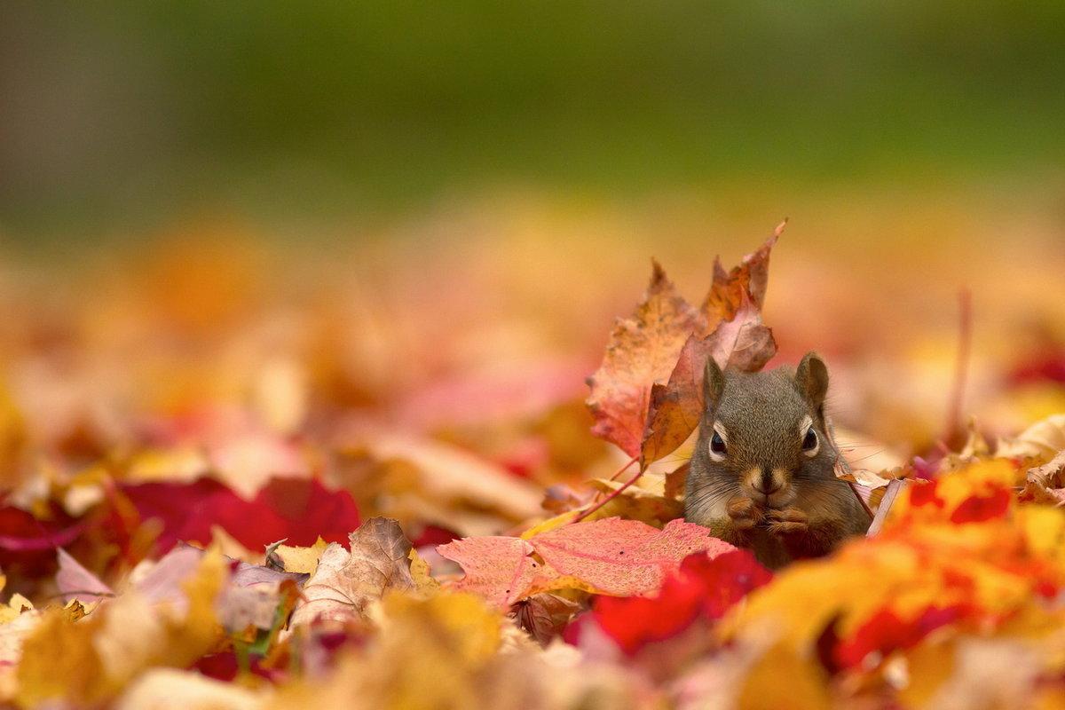 картинки про осень и животных этот сайт поможет