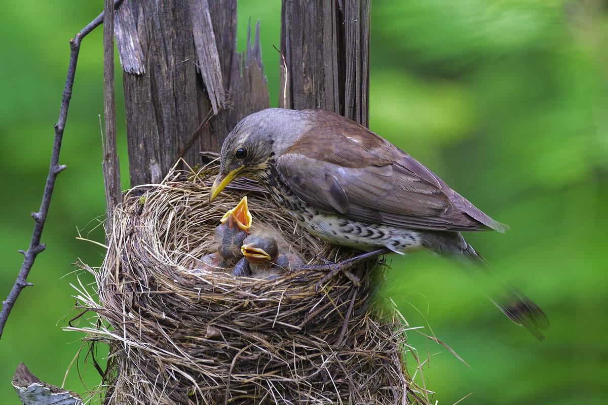 Гнездо с птичкой картинки
