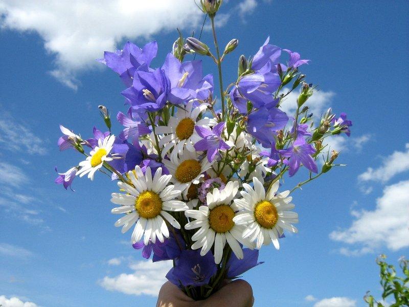 Юбилеем картинки, красивые картинки букетов полевых цветов для любимой