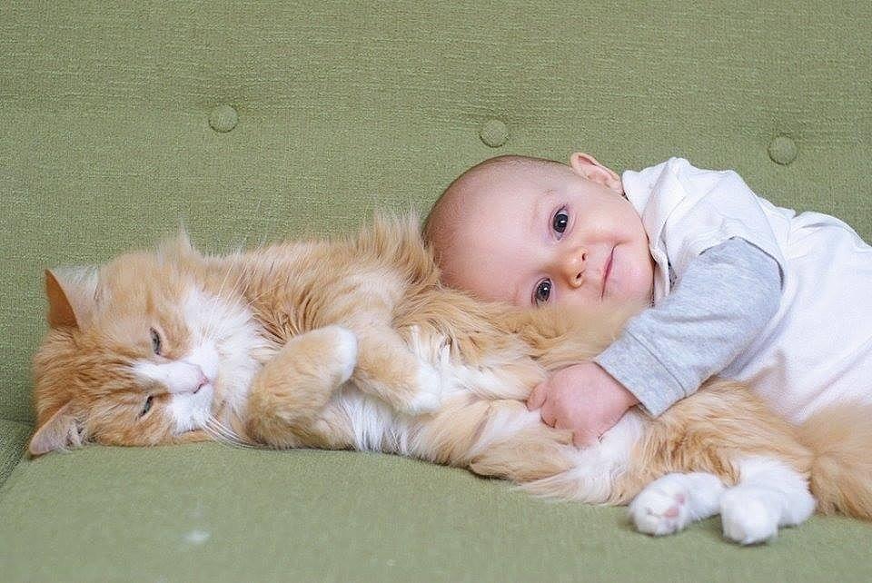 Картинка с кошками для детей смешное, музыкальные подруге картинки