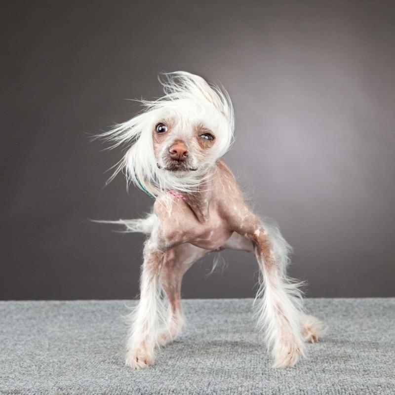 небольшая смешная собака