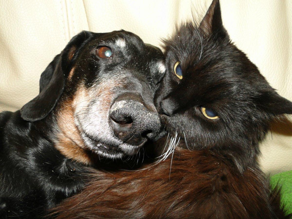 коты и собаки вместе фото данный момент появляется