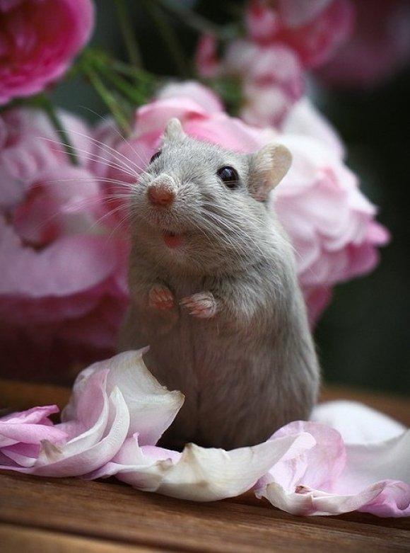 Открытки день, картинки мышек красивые