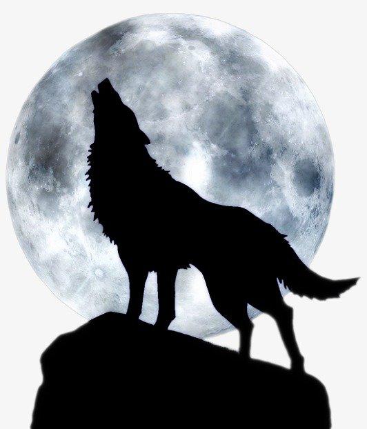 «Волк воет на луну» — карточка пользователя Анна Комарова ...