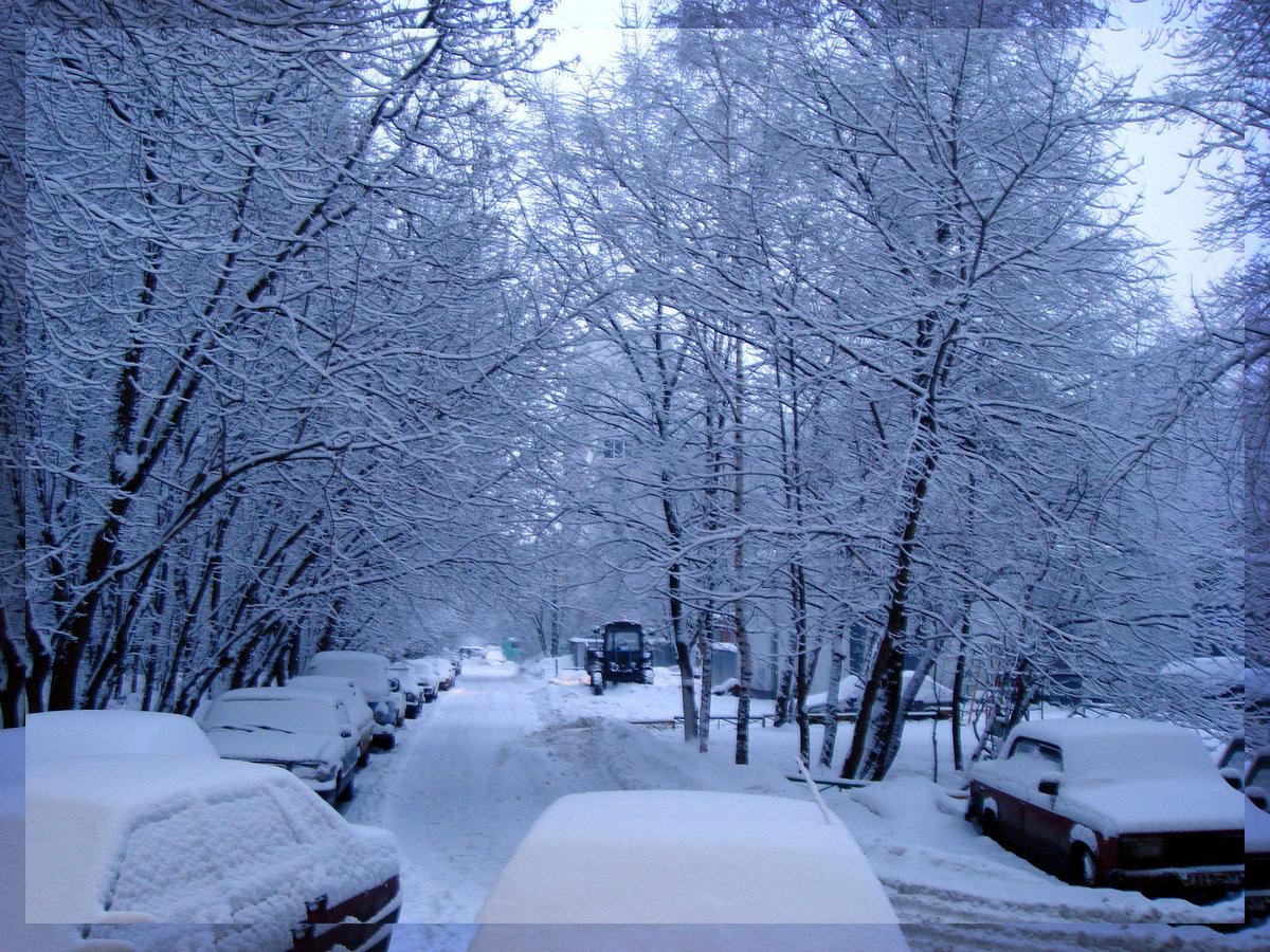 флора способна картинки красивые снег идет с добрым утром месяц так