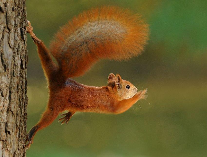 Веселые картинки с белками, животными фотки надписями