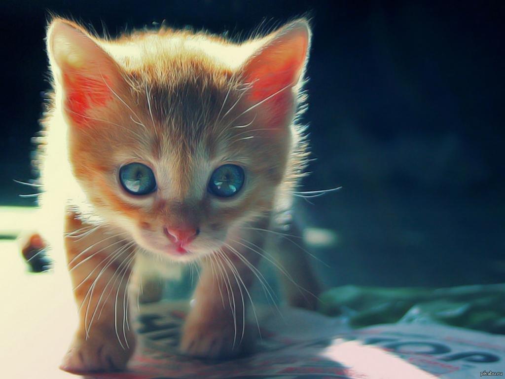 наливные самые няшные картинки с котятами частности чума, энцефалит
