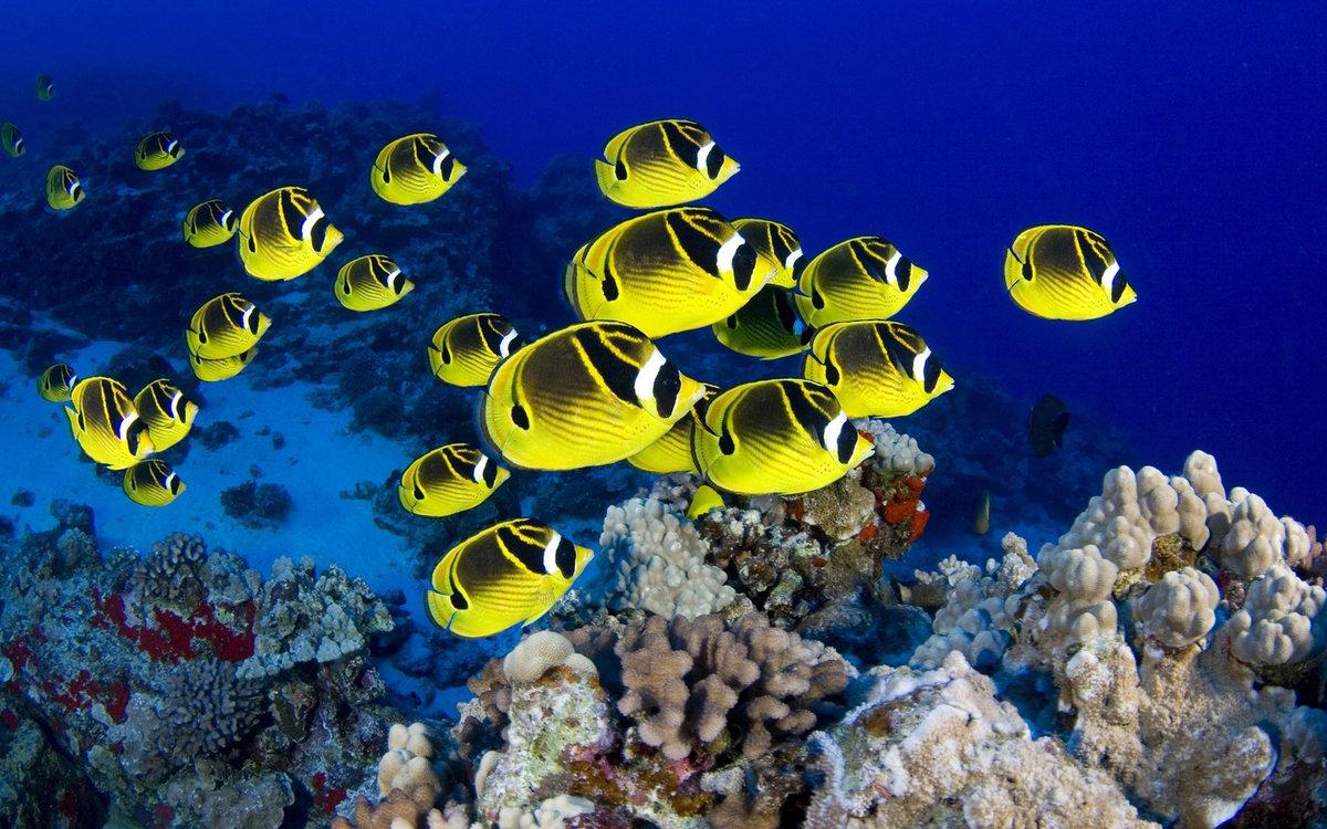 многих странах картинки на рабочий стол подводный мир океана много фотографий разным