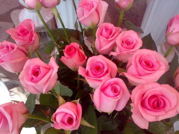 Картинки цветов для сестры, ара