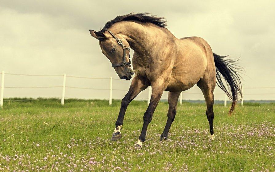 Открытки, картинка лошадей в высоком качестве