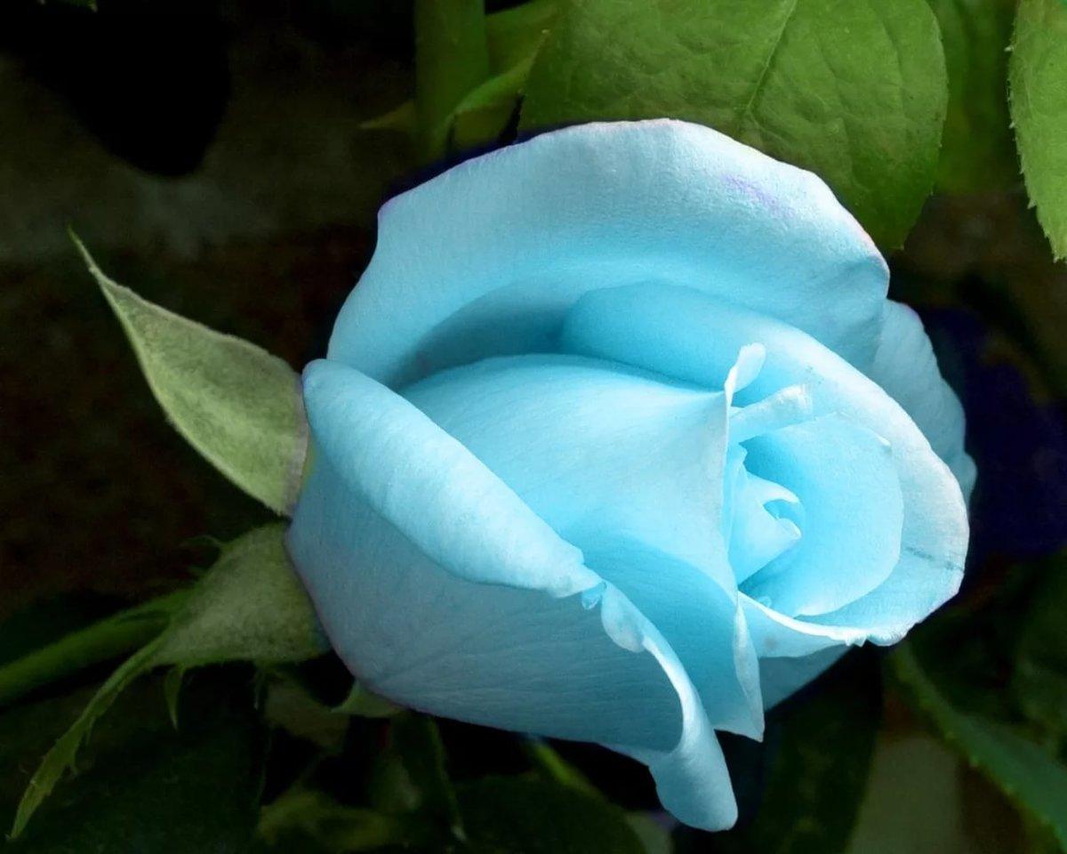 Купить живые голубые цветы, заказ усть-каменогорске