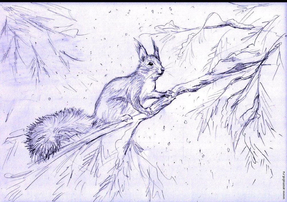 Картинки животных в лесу карандашом