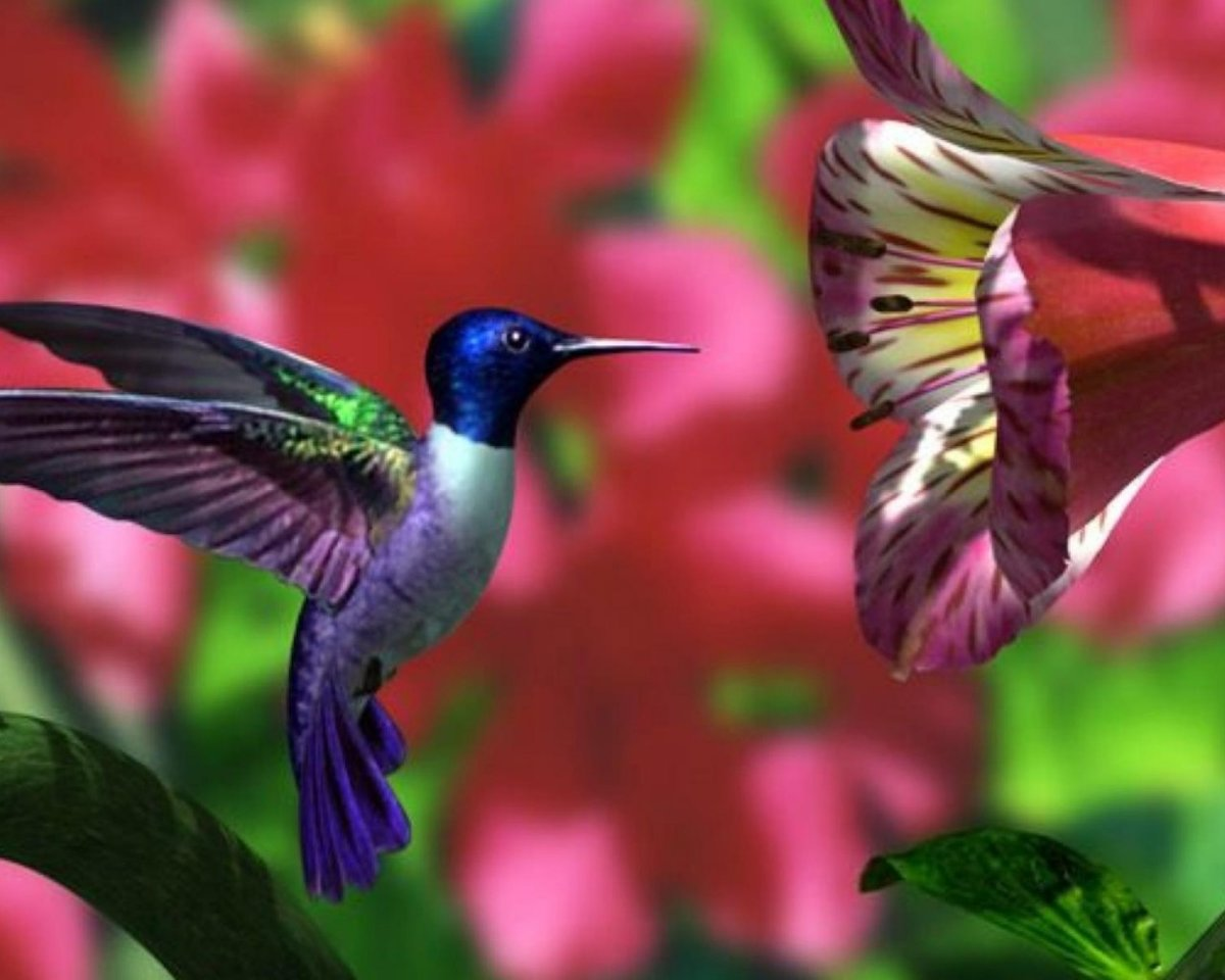 картинки с птичками колибри достаточно красивый