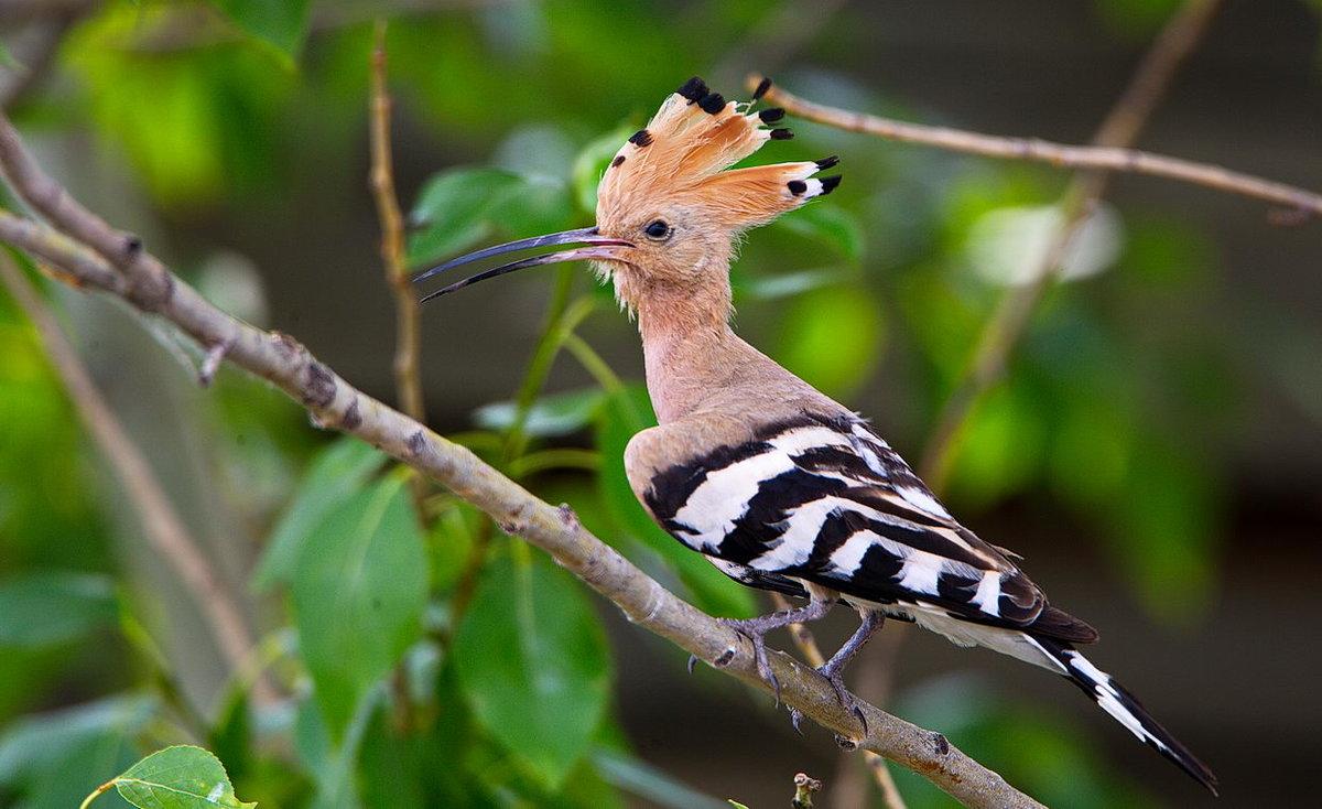 смотреть фото птицы джек уходе растение