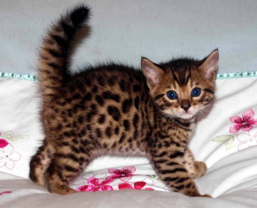 Покажи фотографии кошек и сколько они стоят