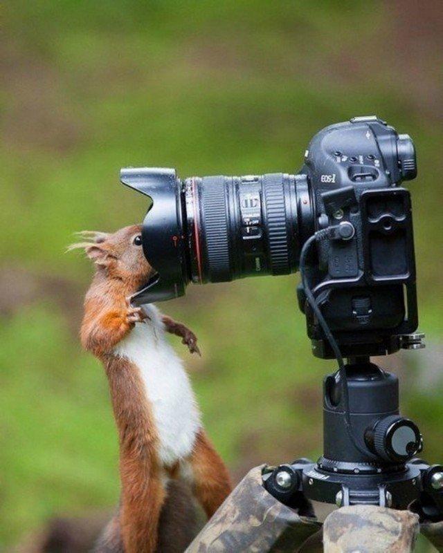рационе мустангов фотоаппарат и животные картинки прячутся