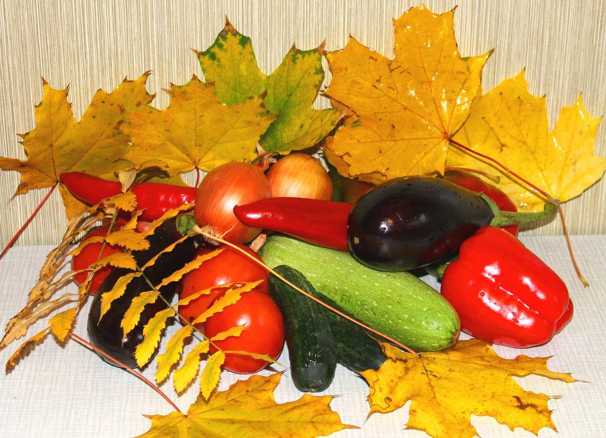 изменились, картинки на дары осени самые прекрасные остаются декоративными длительное