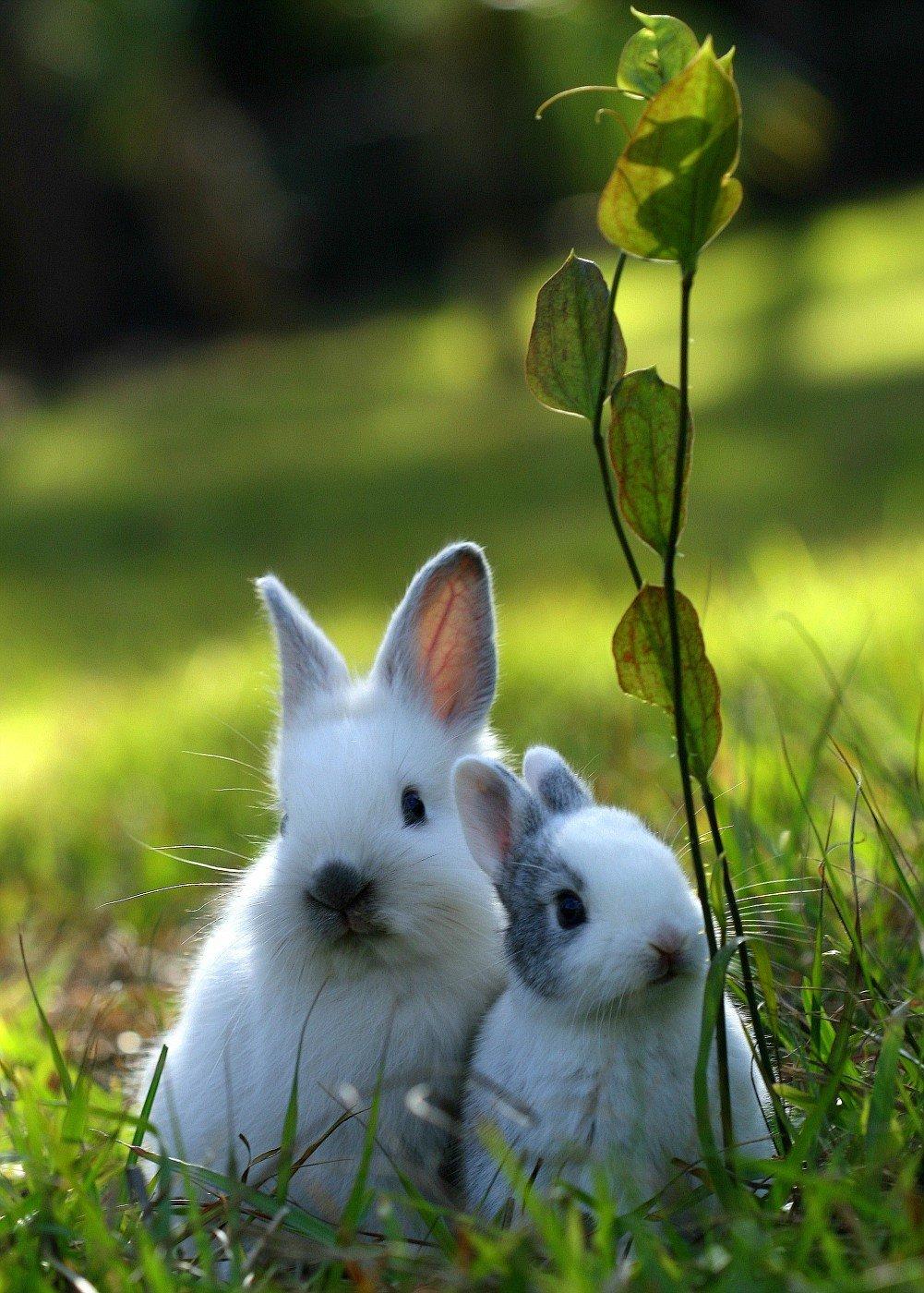 картинки про зайцев красивые