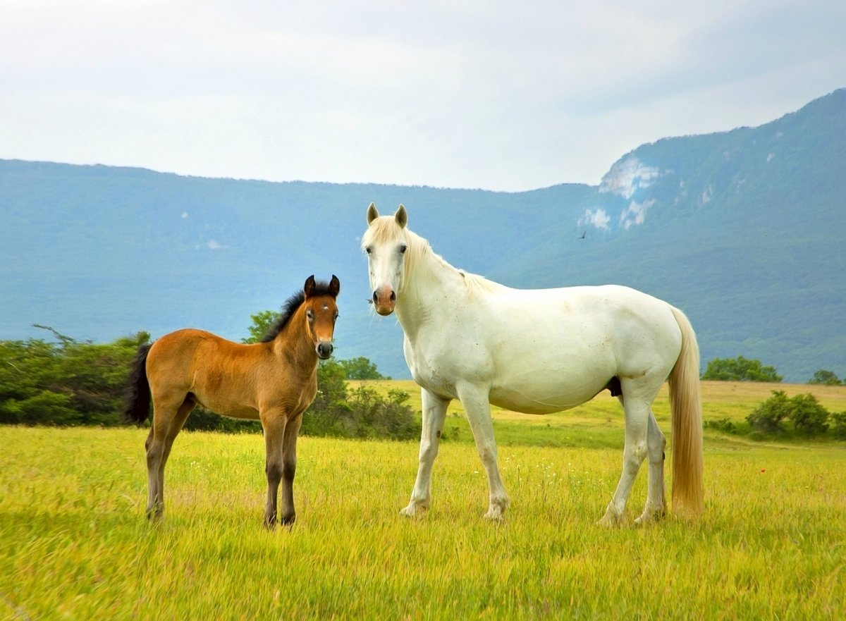 кислота картинка лошади на лугу чтоб
