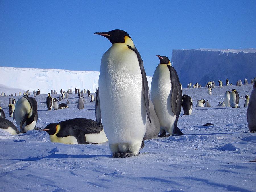 картинки антарктического пингвина школу, перед