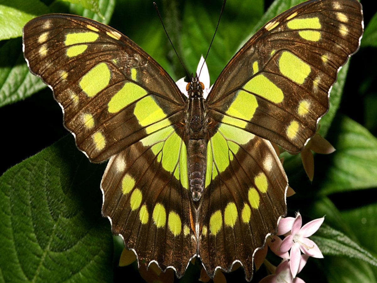 Картинки фотографии бабочки