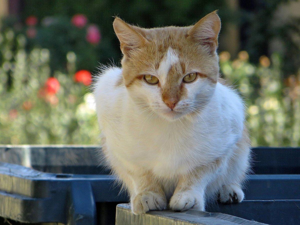 Грудь большими фото кота в душі