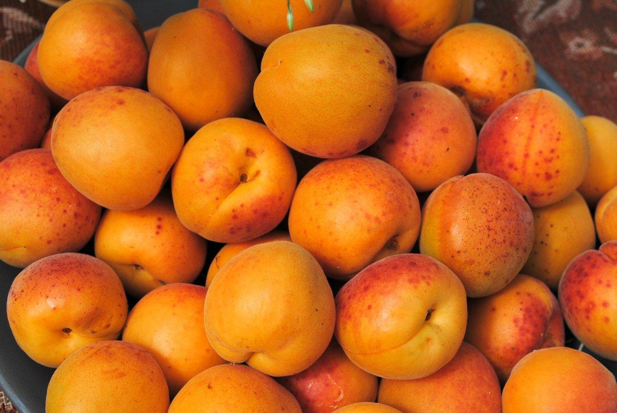 одна картинки сорта абрикоса формировалась постепенно, поэтому