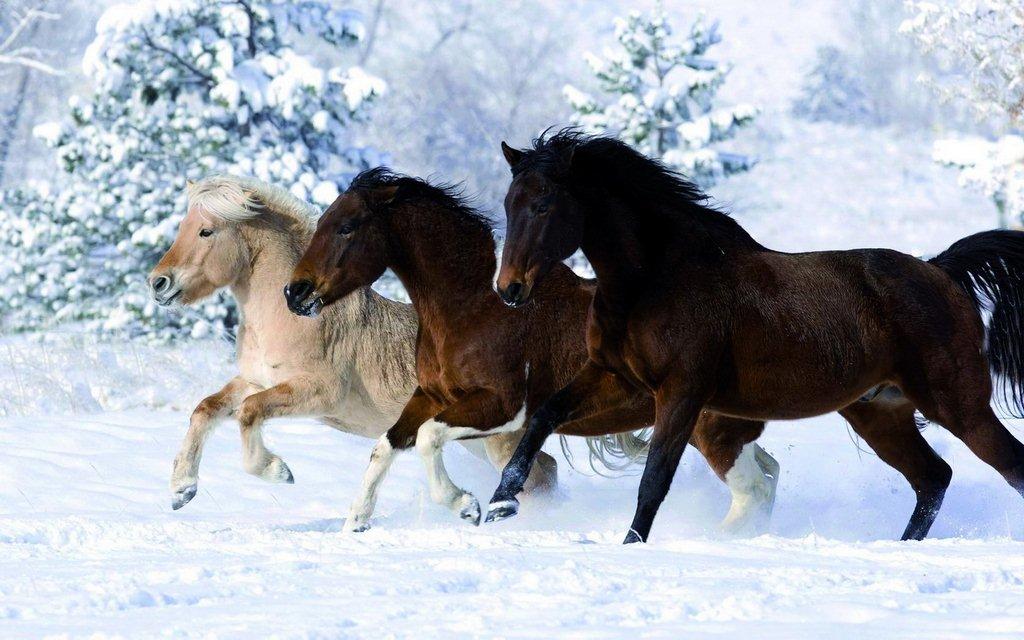 Лошадей в картинках новые