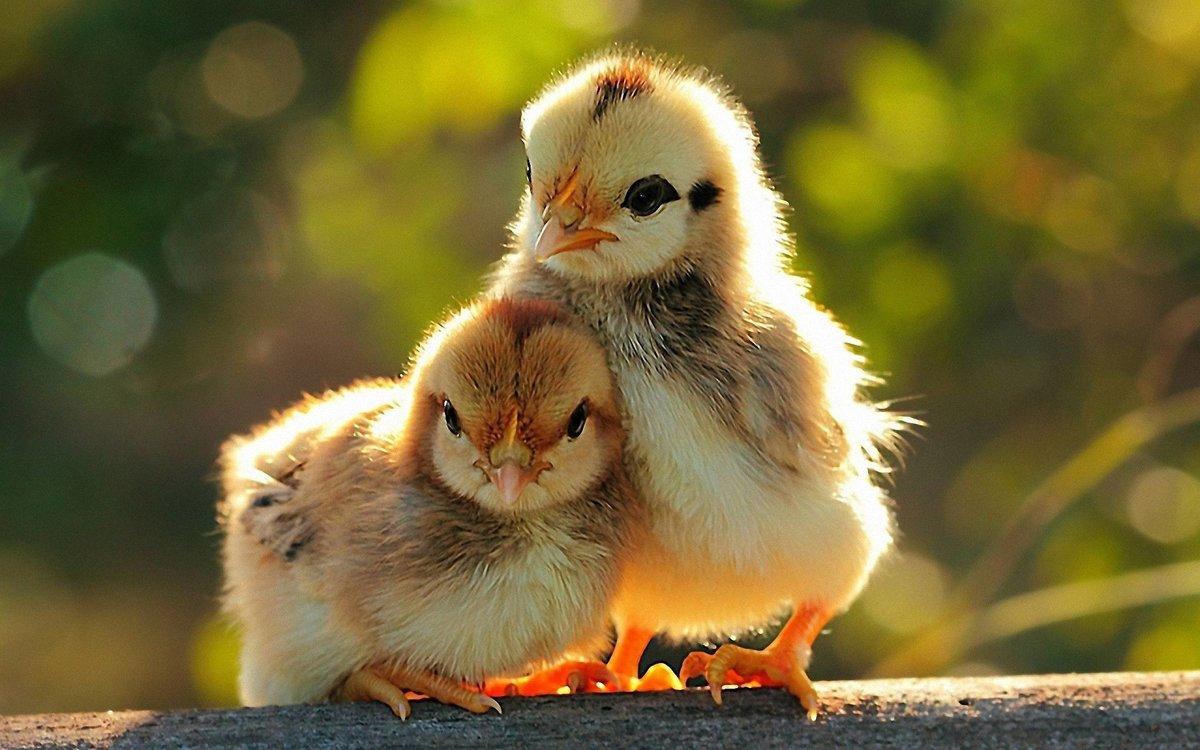 картинки про милых животных