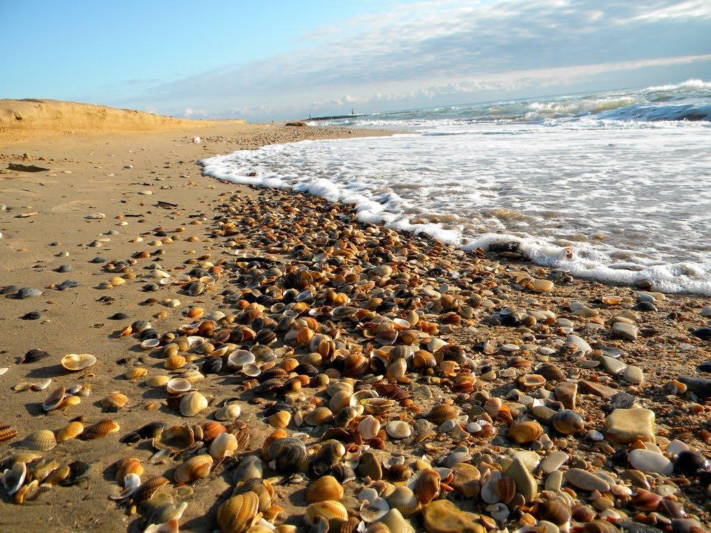 Отдых у каспийского моря отзывы фото