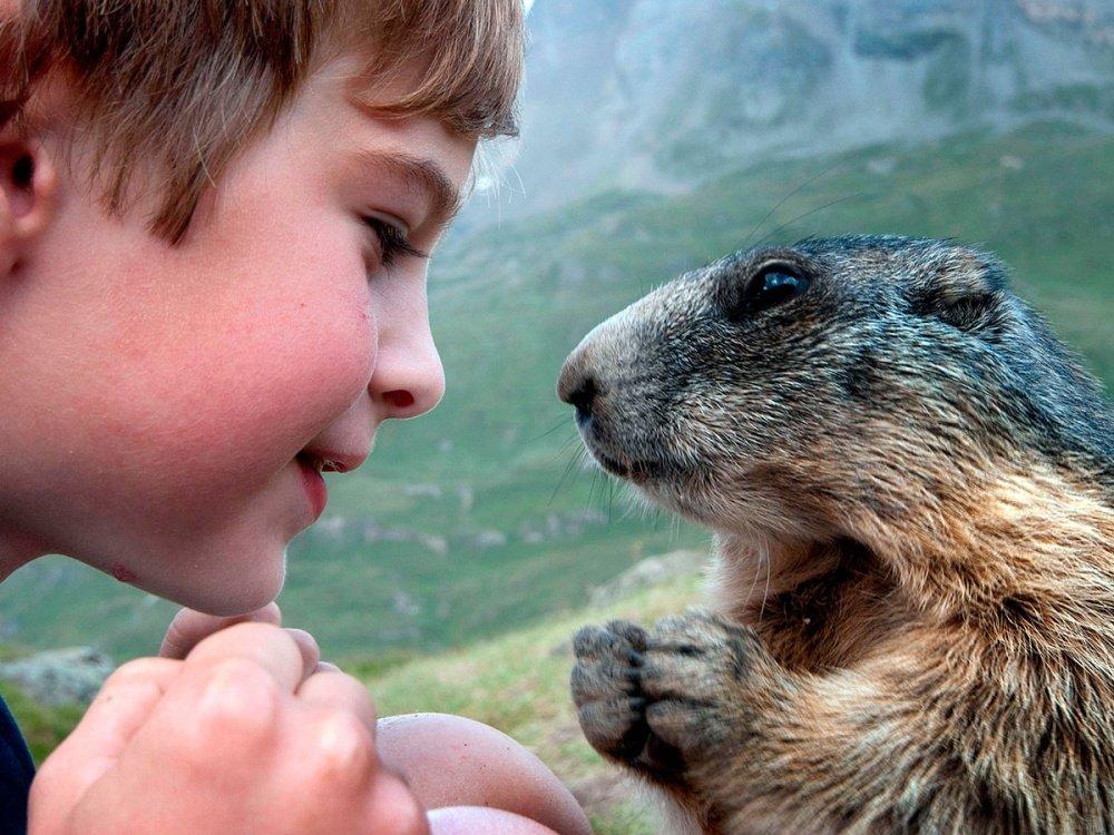 Животные и люди смешные картинки, добрым утром подруге