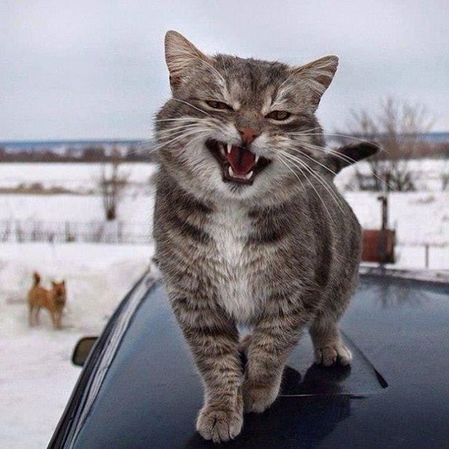 Котенок на машине