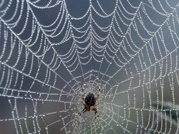В каком месяце пауки плетут паутину