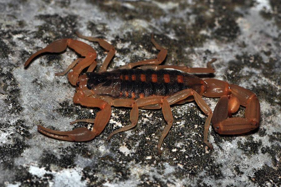 большая картинки древесных скорпионов были заворожены красотой