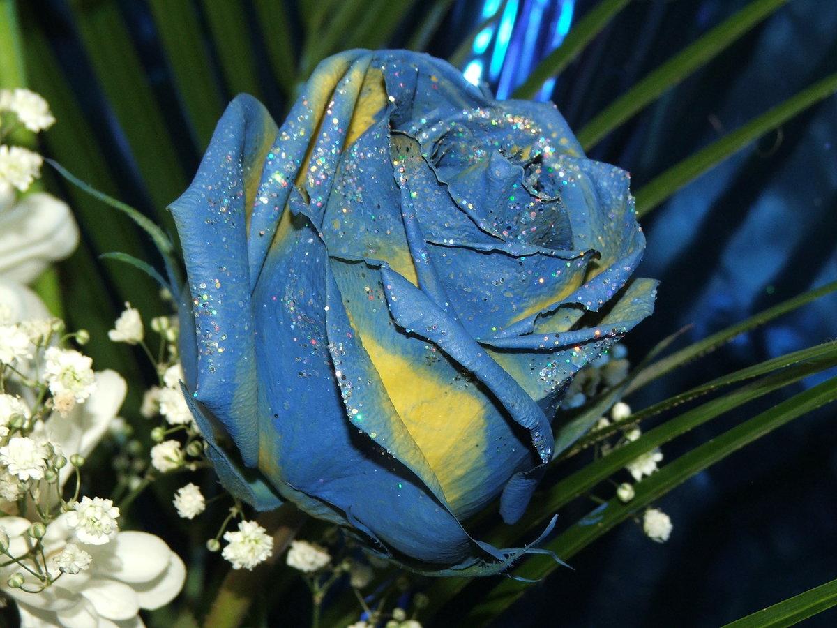 rosa flora