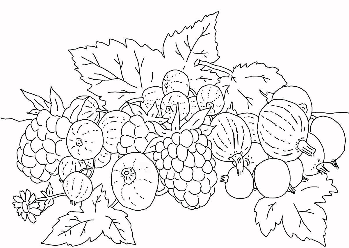 Картинка ягод раскраска