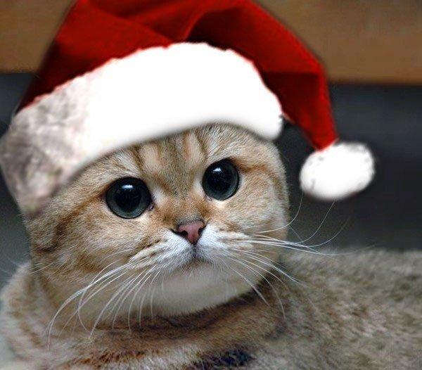 фотки котиков на аву в скайпе для пацанов обладает