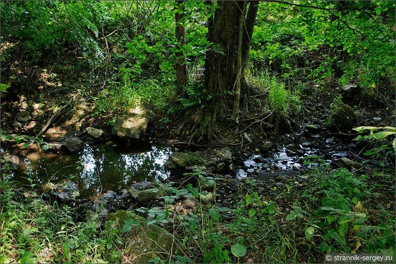 Природа августа ручей.