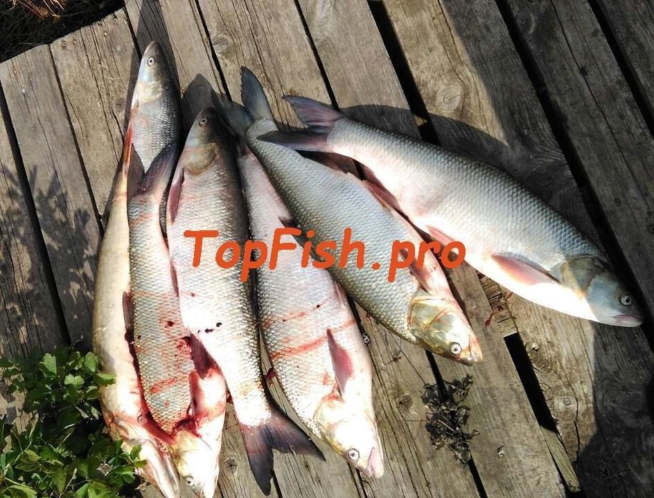 купить активатор клева fishhungry за 990 рублей