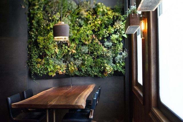 Вьющиеся комнатные растения, которые можно часто заметить в  интерьерах