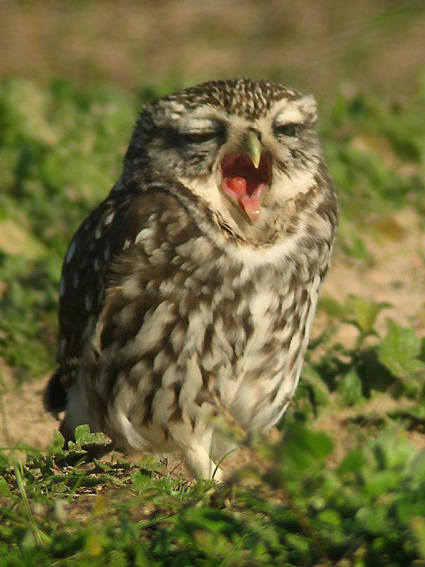 фото сонной совы бог всегда