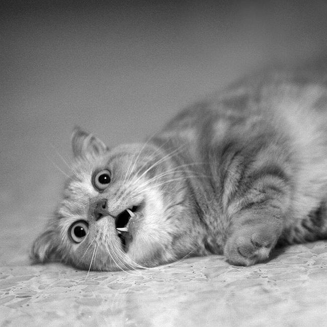 Интересные картинки с кошками и надписям