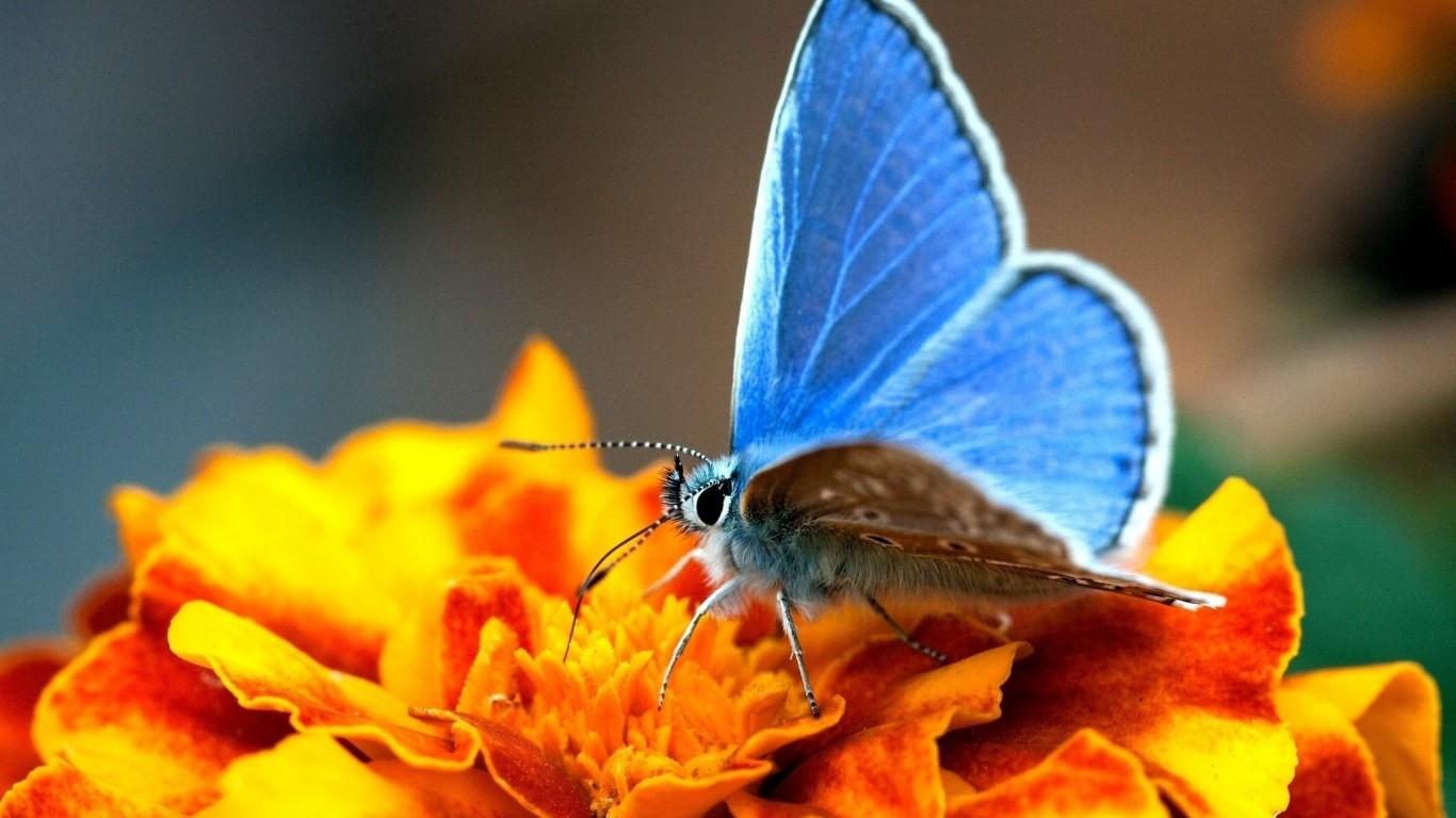 Открытка «Бабочка на цветке» » Сделай сам 86