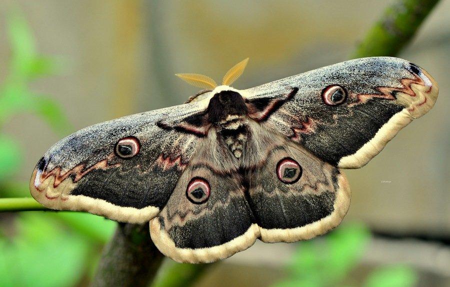 Ночная Бабочка Сканворд